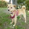 人が大好き。小型犬サイズの可愛いポピーちゃん サムネイル2