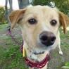 人が大好き。小型犬サイズの可愛いポピーちゃん サムネイル7