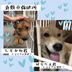 2021年4月9日の倉敷→全頭譲渡決定!