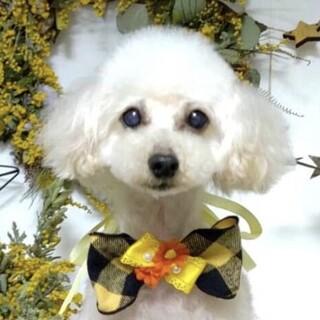 鉾田(ほこた)抱っこ大好きな美犬さん♡