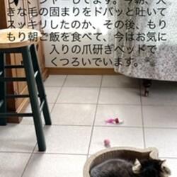 猫の様子2021.04