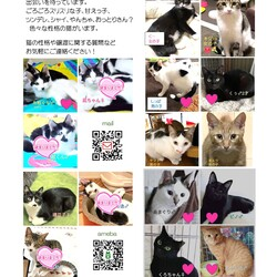 保護猫譲渡会@島忠八潮店