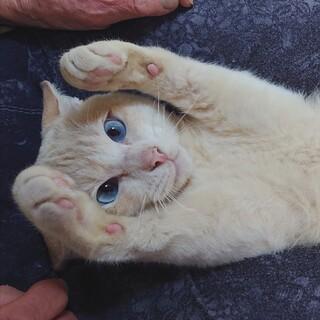 生後9ヵ月体重6キロのイケメン(太郎君)