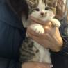 かわいい子猫がずっとのおうち探してます。