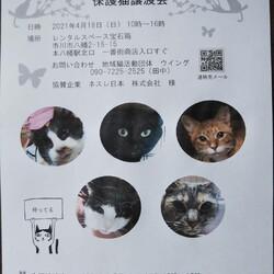4/18市川市地域猫活動団体ウイング譲渡会