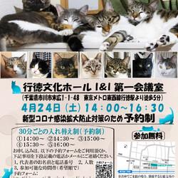 【千葉県市川市】イコール保護猫譲渡会vol.6 サムネイル1