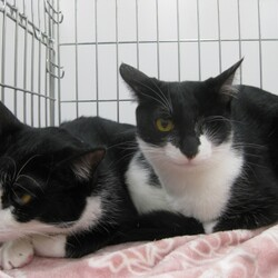 【千葉県市川市】イコール保護猫譲渡会vol.6 サムネイル3