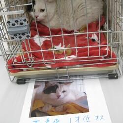 【千葉県市川市】イコール保護猫譲渡会vol.6 サムネイル2