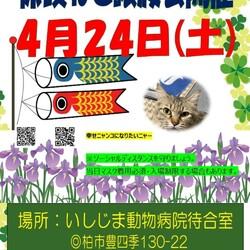 保護ねこ譲渡会@いしじま動物病院待合室 サムネイル1
