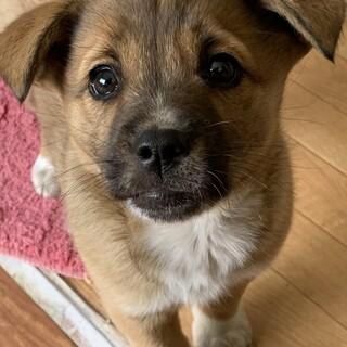 まんまるオメメの可愛い垂れ耳仔犬