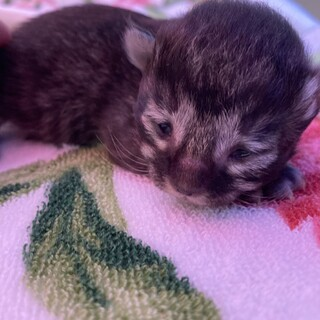 保護した猫の赤ちゃん②