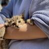 写真更新しました!1ヶ月の子猫です