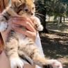 写真追加しました!1ヶ月の子猫です