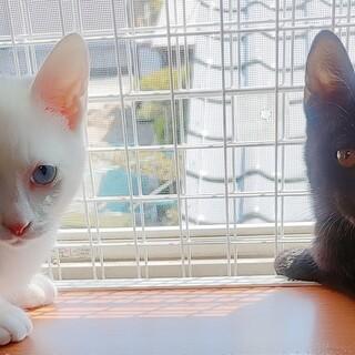 青い目の白君⭐黒ちゃん兄妹