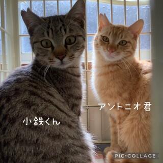 【お見合い歓迎】可愛い兄弟‼︎