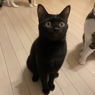 【4/18芝浦】超甘えん坊わがまま黒猫女子ジジコ