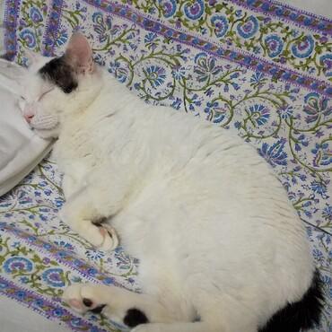 たまちゃんの寝顔