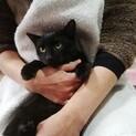 シュッとしたイケニャン♡は猫じゃらし大好き
