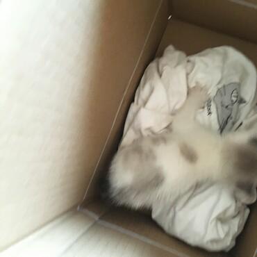 最初の出会い 捨てられた仔猫