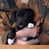 人懐こくて甘えん坊な可愛い2ヶ月の男の子 サムネイル6