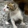 子猫(生後20日ほど)女の子
