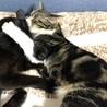 猫大好きマーブル模様のキジ白ちゃん サムネイル5