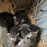子猫ちゃん達の里親を探しています。