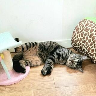 【 お目目クリクリ 】超ビビりの美猫