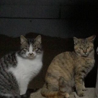 地域猫4匹の里親募集