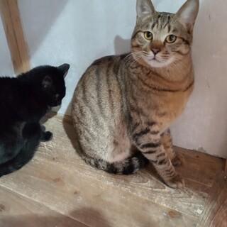 他の猫達から好かれる男の子☆