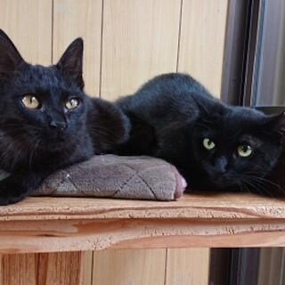生後4カ月の黒猫募集中