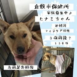「倉敷、野犬のトリセツ、野犬譲渡」サムネイル3