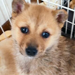 【周南保護犬】ミーアキャットみたいなかわいいワンコ