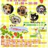 4/18(日)譲渡会参加です!仔犬の千ちゃん❣️ サムネイル5