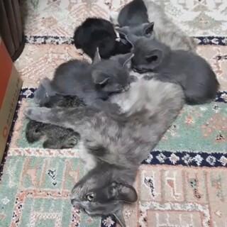4匹の子猫の里親を募集しています。