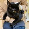 遊ぶのが大好きなカッコいい『黒猫』くん