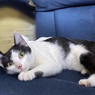 人にべったり懐いてかわいい白黒猫♡