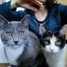 子猫三匹 サムネイル2