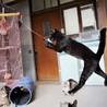猫じゃらし大好き☆黒猫の男の子 サムネイル2