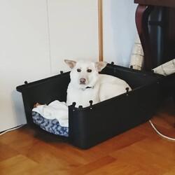 「保護犬との日々」サムネイル2