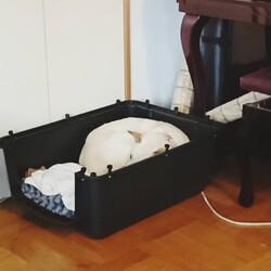 「保護犬との日々」サムネイル3