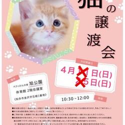 中止になりました!!!知多市☆阿久比☆常滑☆旭公園猫の譲渡会