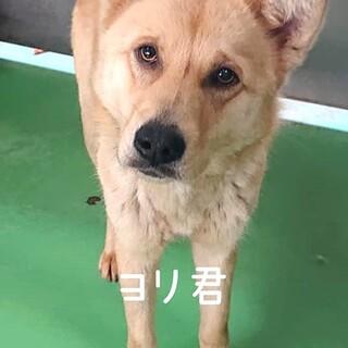 収容房③野犬男子ヨリ君 薄茶色