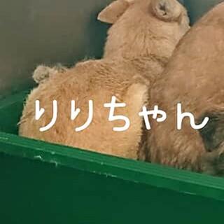 収容房②野犬女子リリちゃん 薄茶
