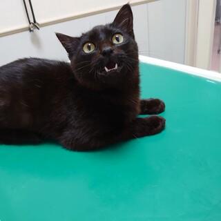 人が大好き黒猫★永司★甘えん坊