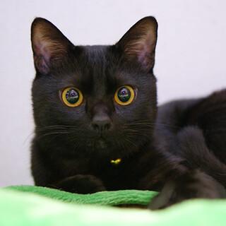 オシャレな黒猫♪ 蔵之介くん