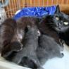 全て黒猫♪生後3~4週間の子猫&母猫の里親募集