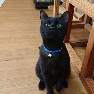 人馴れ抜群おちゃめな黒猫、ノワールくん