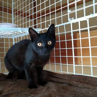可愛い 黒猫 ウンガロちゃん