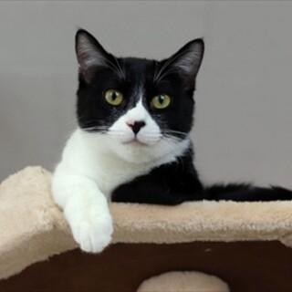 黒白子猫 アバルト君 里親様募集です♡